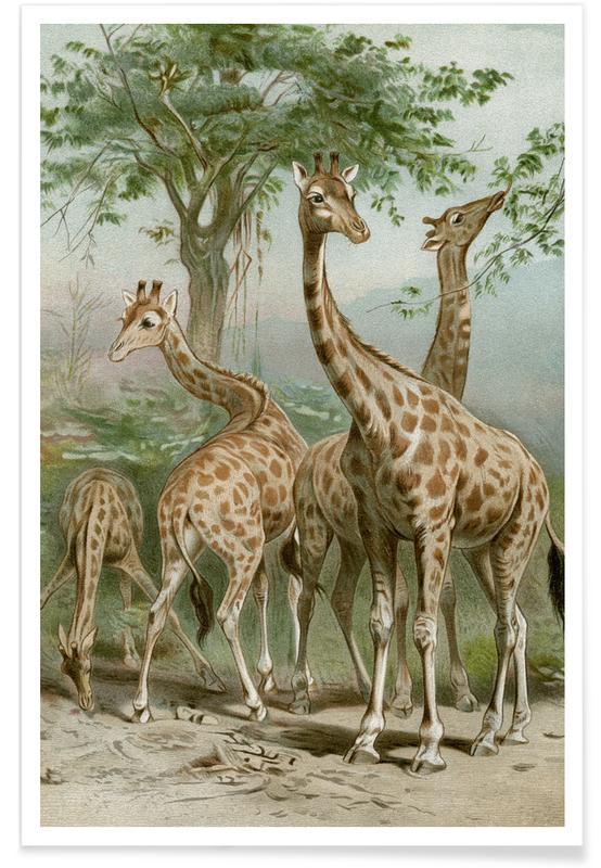 Safari Animals, Brehm 1 Giraffe Poster