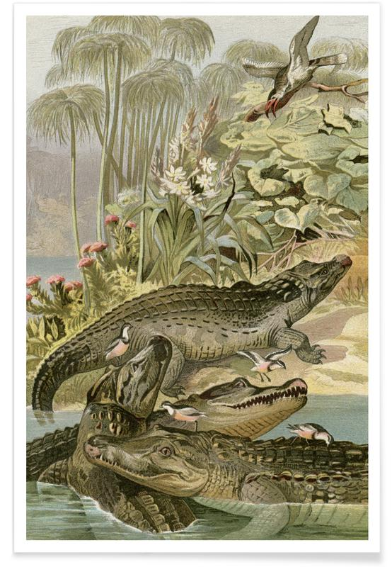 Vintage, Brehm 1 Krokodil poster