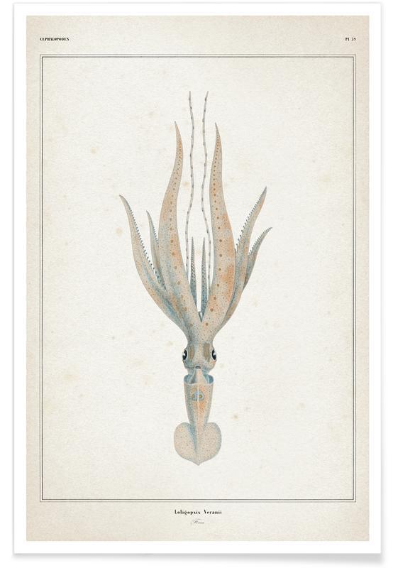 Blæksprutter, Vintage, Vérany 1 Loligopsis Veranii Plakat