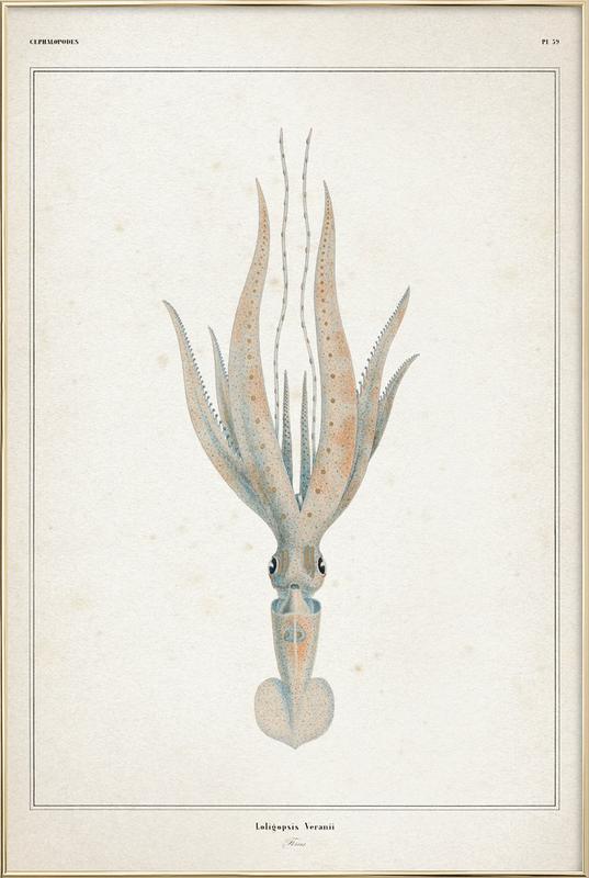 Loligopsis Veranii - Vérany poster in aluminium lijst
