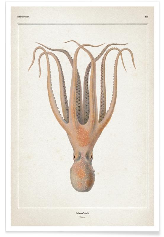 Blæksprutter, Vintage, Vérany 1 Octopus Salutii Plakat