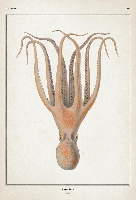 Octopus Salutii - Vérany Aluminium Print