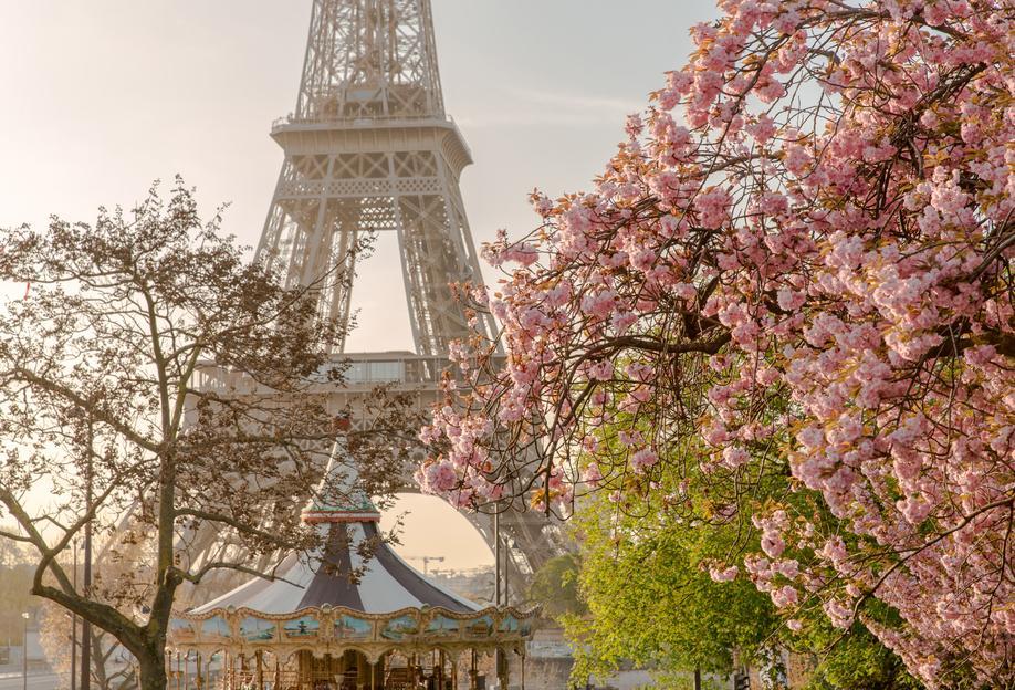 Cherry Blossom -Acrylglasbild