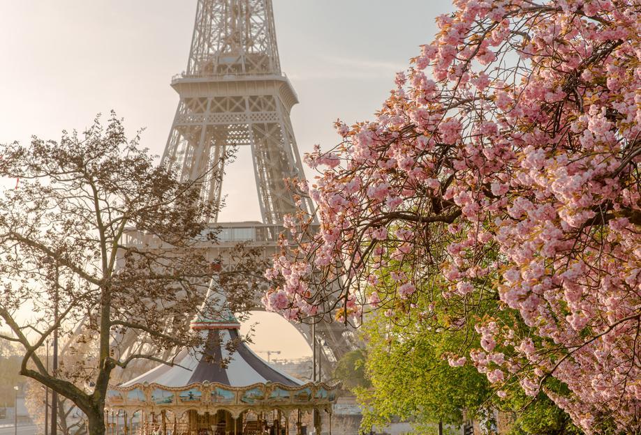 Cherry Blossom alu dibond