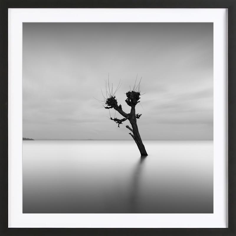 Albero Nel Lago Trasimeno II Framed Print