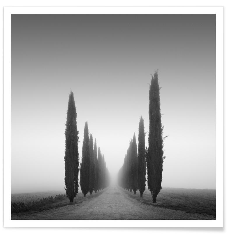 Voyages, Arbres, II Viale Poggio Covii affiche