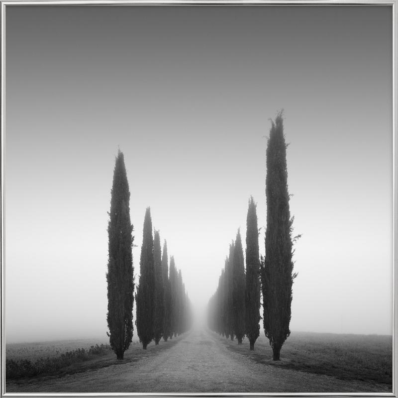 II Viale Poggio Covii -Poster im Alurahmen