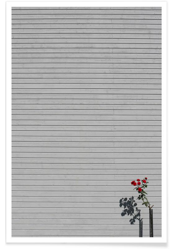 Architectural Details, Roses, Single Rose Poster
