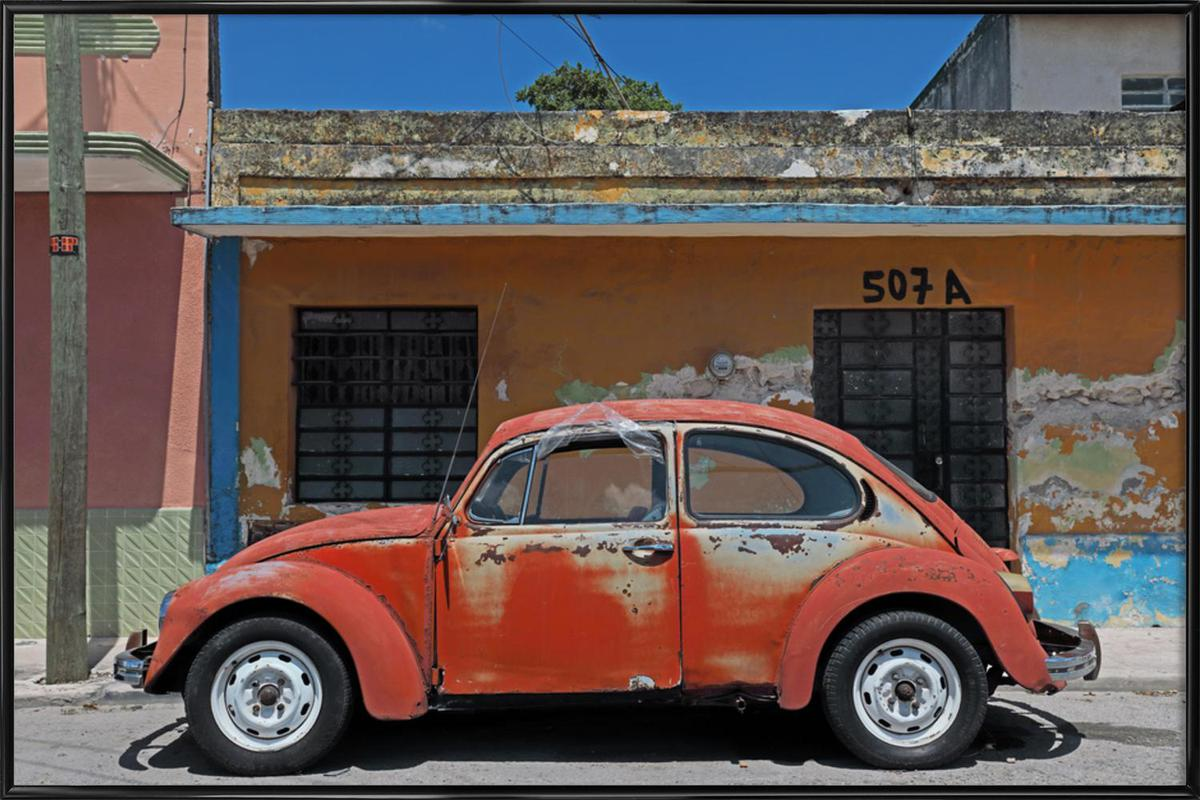 Mexican Beetle 1 Framed Poster