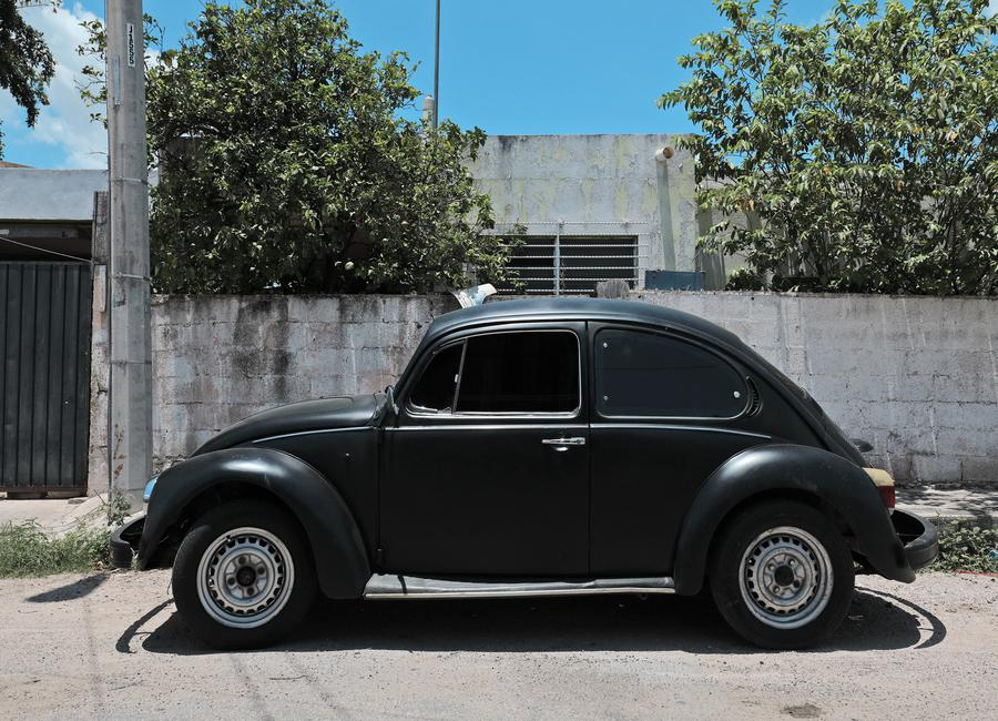 Mexican Beetle 16 Canvas Print