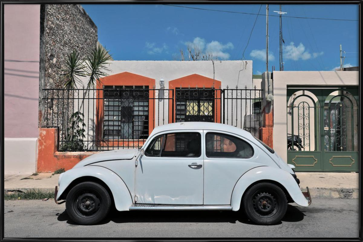 Mexican Beetle 23 Framed Poster