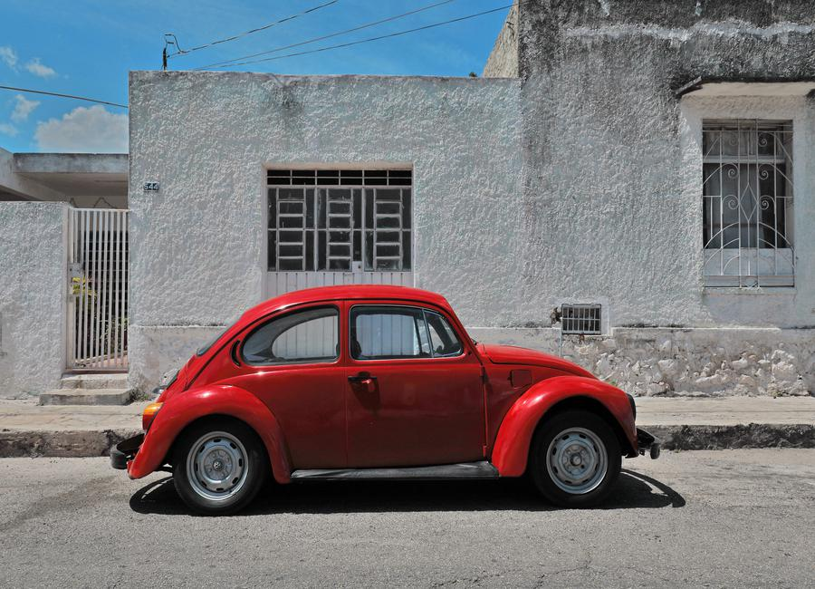 Mexican Beetle 25 Canvas Print