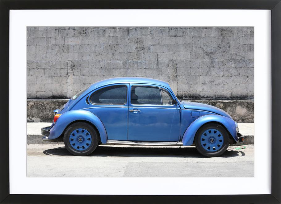 Mexican Beetle 6 Framed Print