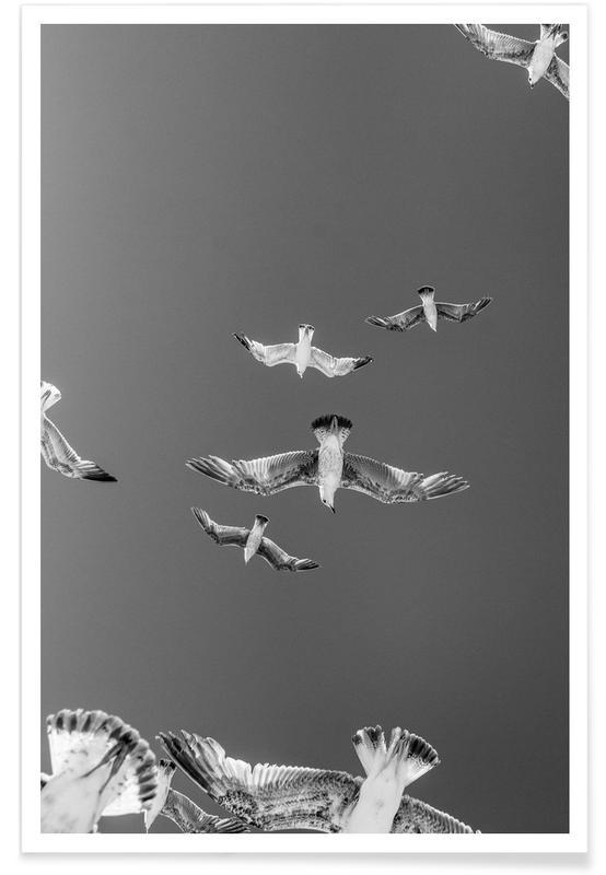 Gaviotas, Blanco y negro, Soaring Birds póster