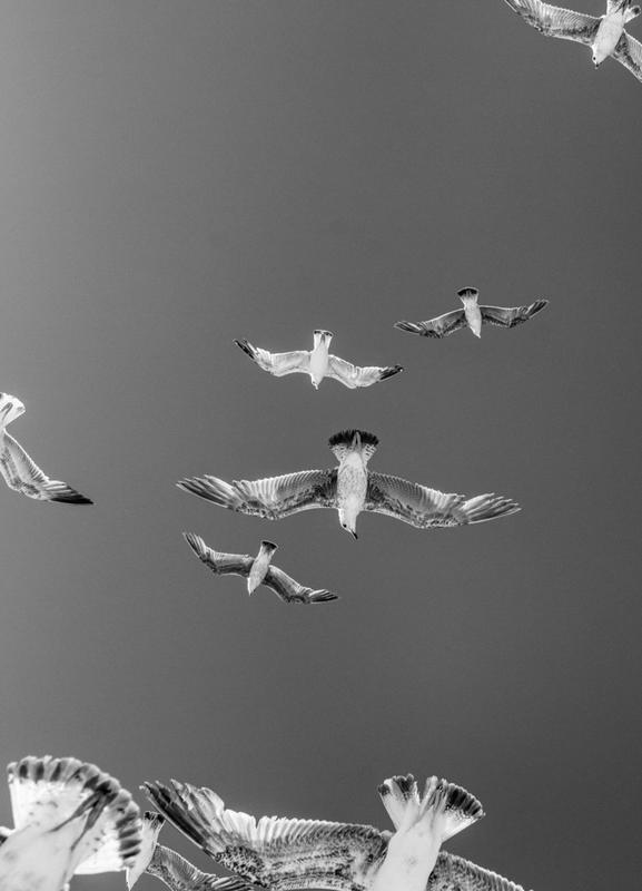 Soaring Birds Canvastavla