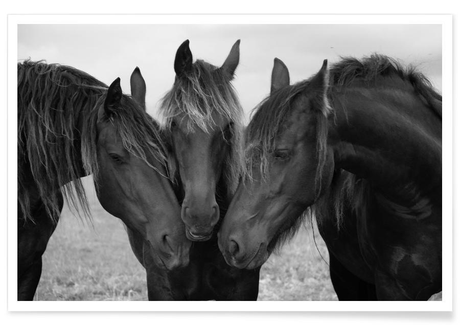 Heste, Sort & hvidt, Black and White Horses Plakat