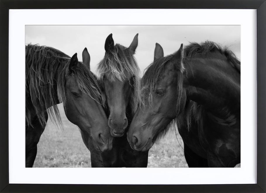 Black and White Horses Poster i träram