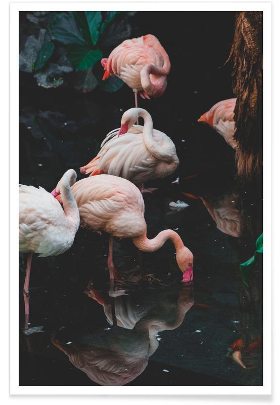 Flamencos, Pink Flamingos póster
