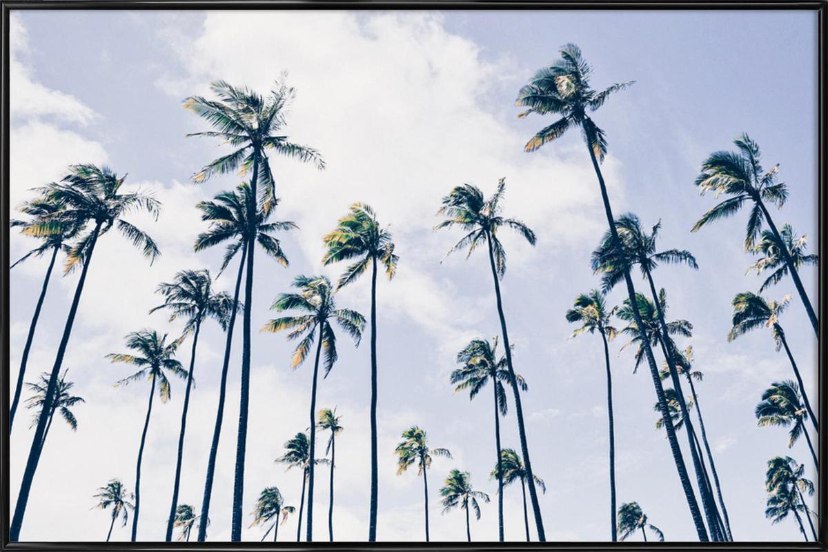 Paradisaic Sky by @WhitneyHolland Poster i standardram
