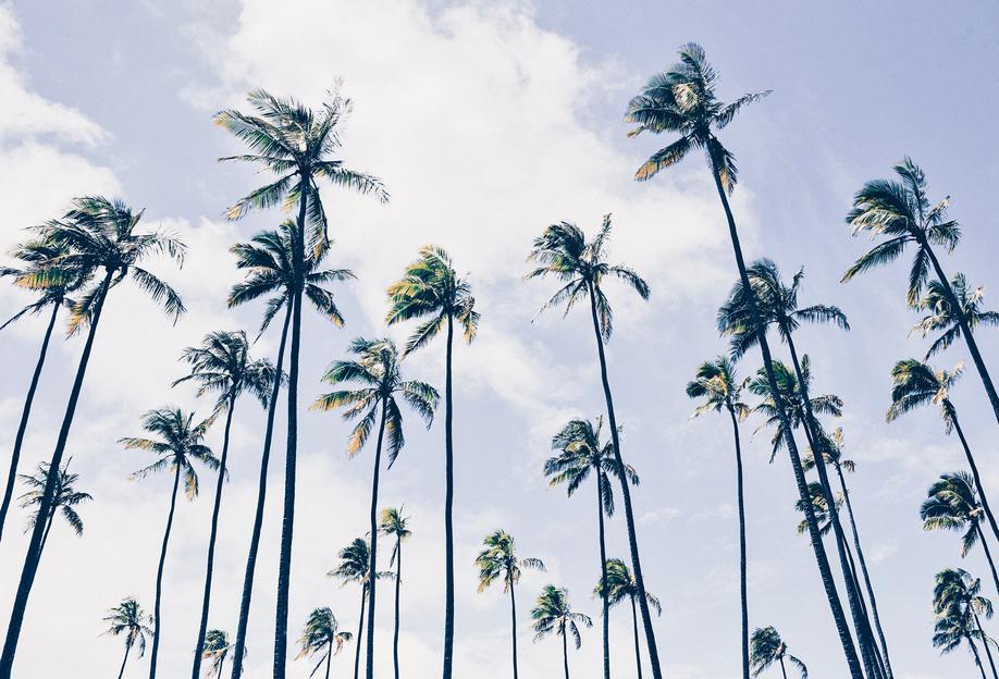 Paradisaic Sky by @WhitneyHolland alu dibond