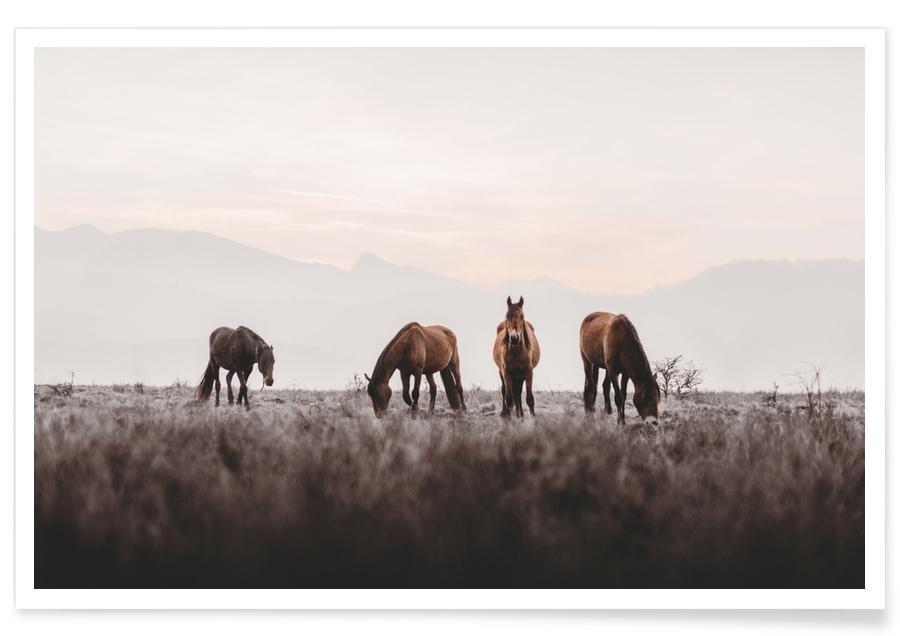 Horses, Out In The Wild @АйдинИсаев Poster