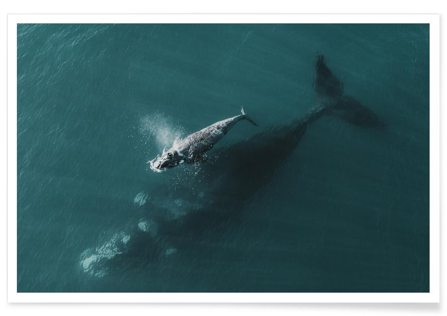 Whales, Where You Go, I Follow @KevinZaouali Poster