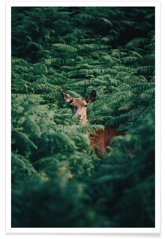 Forests, Deer, A Moment Of Recognition @Andyvalver Poster