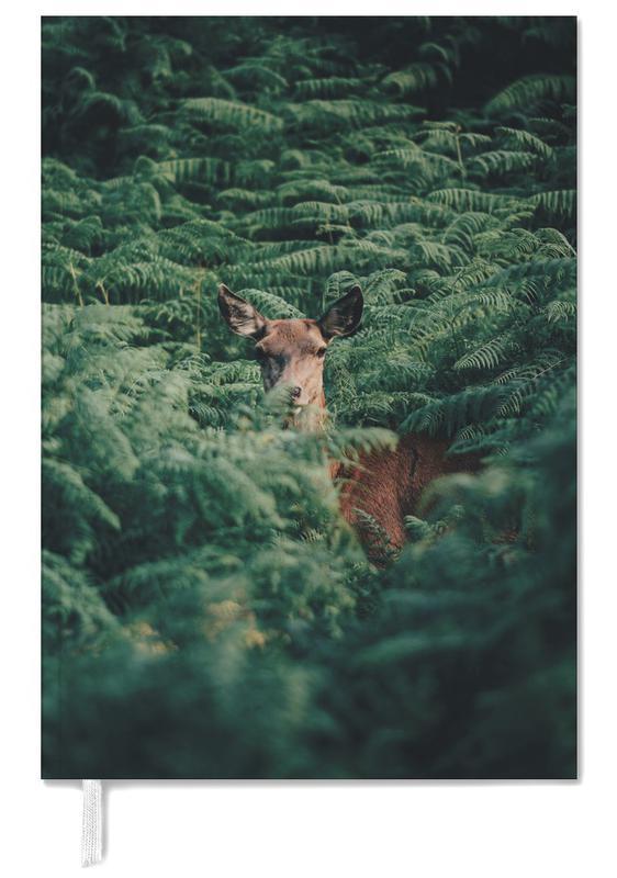 Hirsche, Wälder, A Moment Of Recognition @Andyvalver -Terminplaner