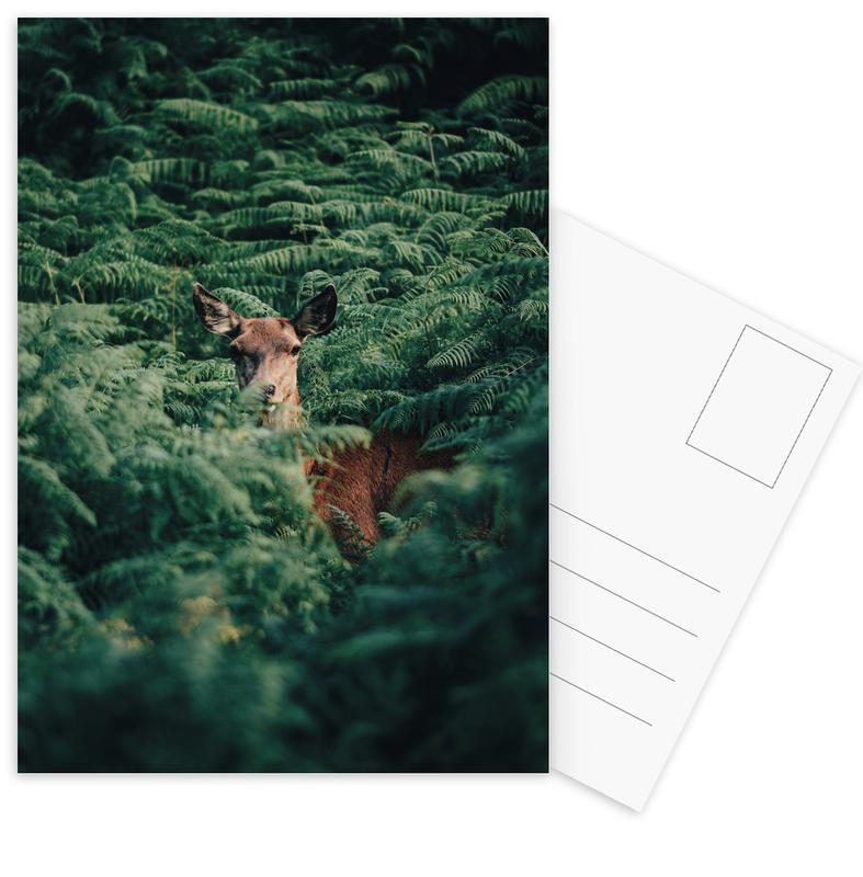 Forêts, Cerfs, A Moment Of Recognition @Andyvalver cartes postales