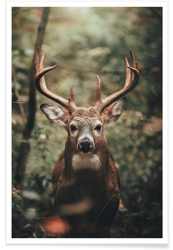 Safari Animals, Regal Crown @DustinTir Poster