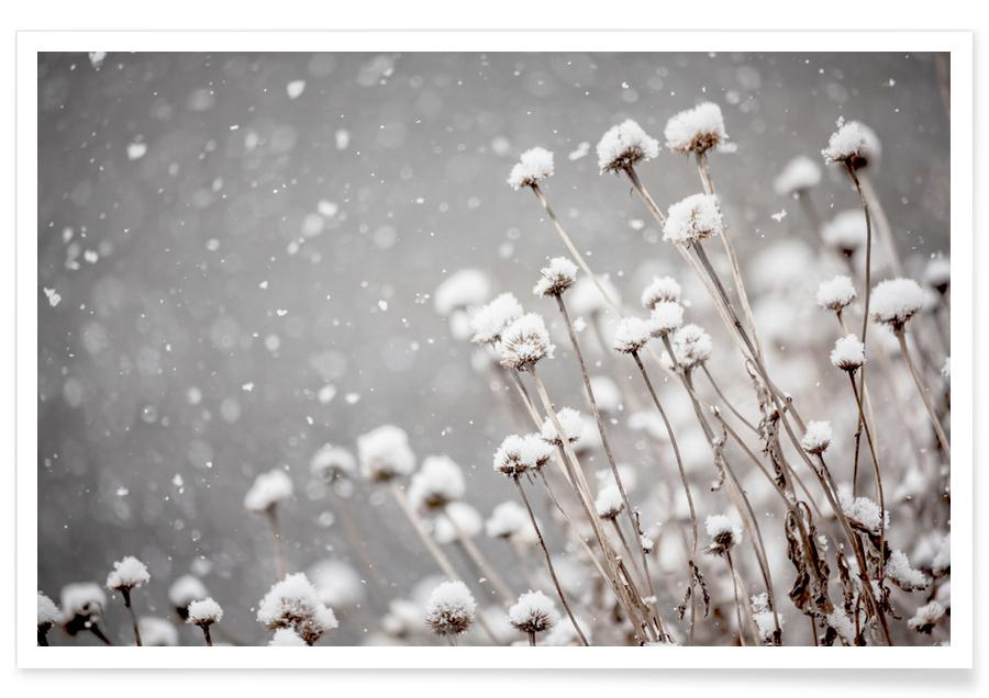 , Watching Snow Settle @PixLifePhoto Poster
