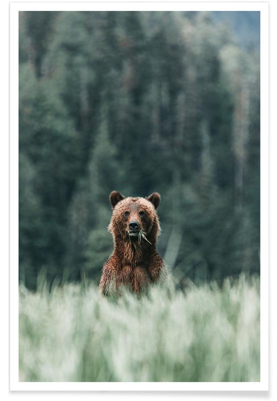 Bears, Standing To Attention @SamJames Poster
