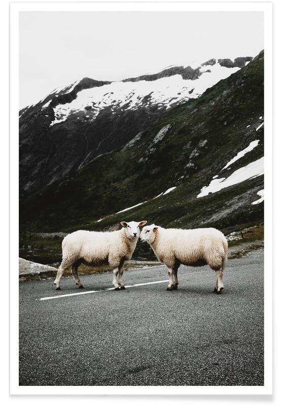 Montagnes, Moutons, Sheepish @jochenwild affiche