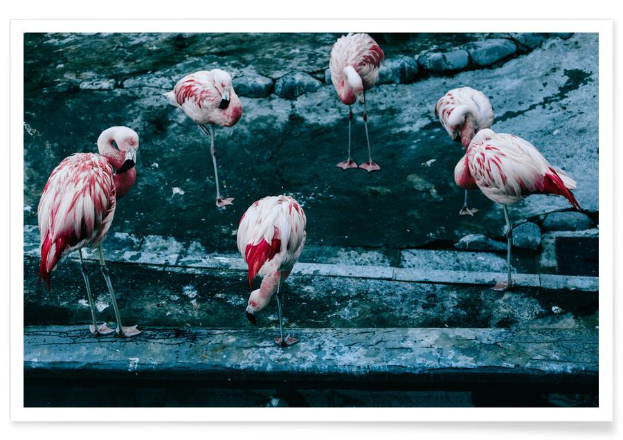 Flamingoer, Flamingos by @esspeshal Plakat