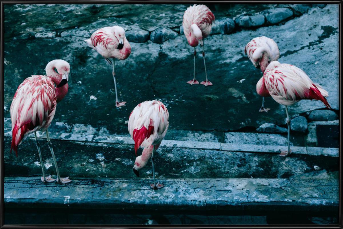 Flamingos by @esspeshal Poster i standardram