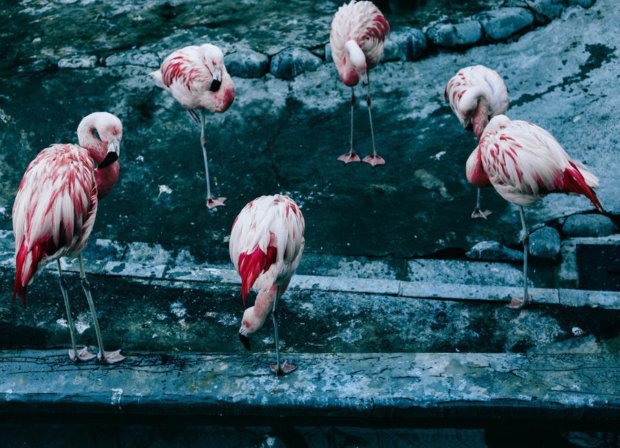 Flamingos by @esspeshal canvas doek
