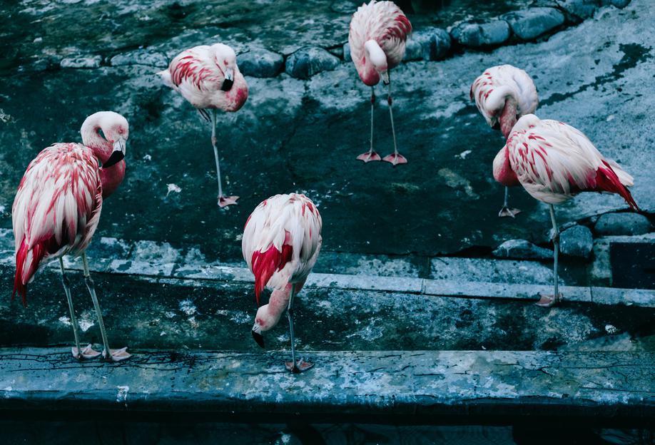 Flamingos by @esspeshal Aluminiumtavla