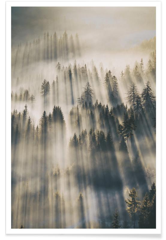 Forêts, Sun Through Cedars @magnus___p affiche