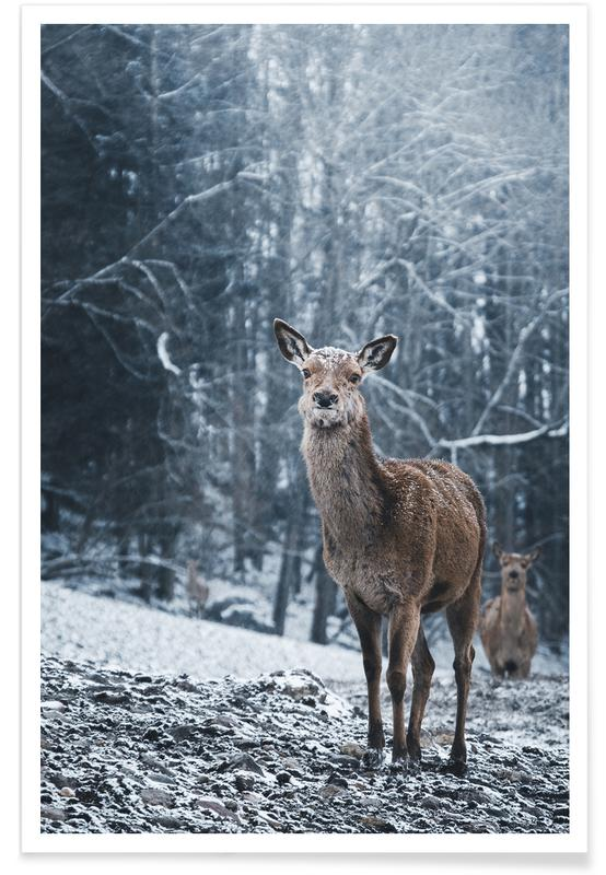 Deer, The Snap of a Twig @nilsleithold Poster