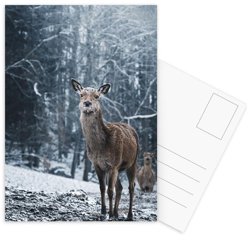 Cerfs, The Snap of a Twig @nilsleithold cartes postales