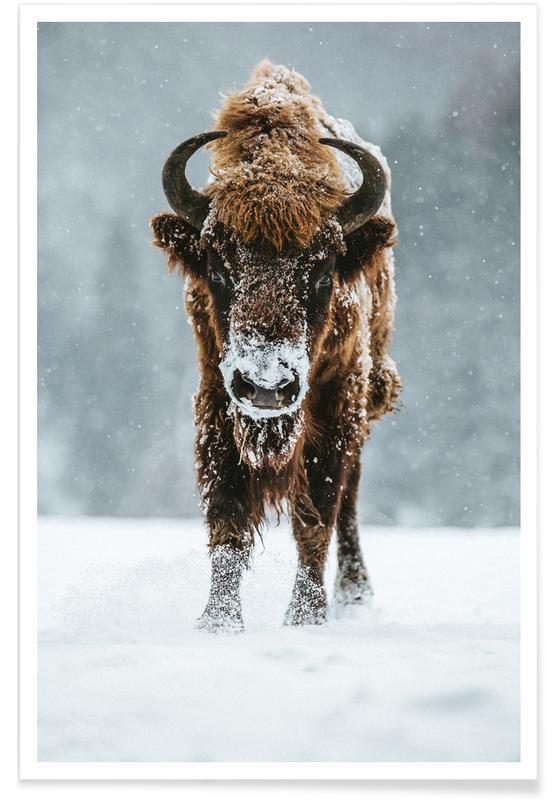 Cows, Great Beast @szabo_ervin_edward Poster