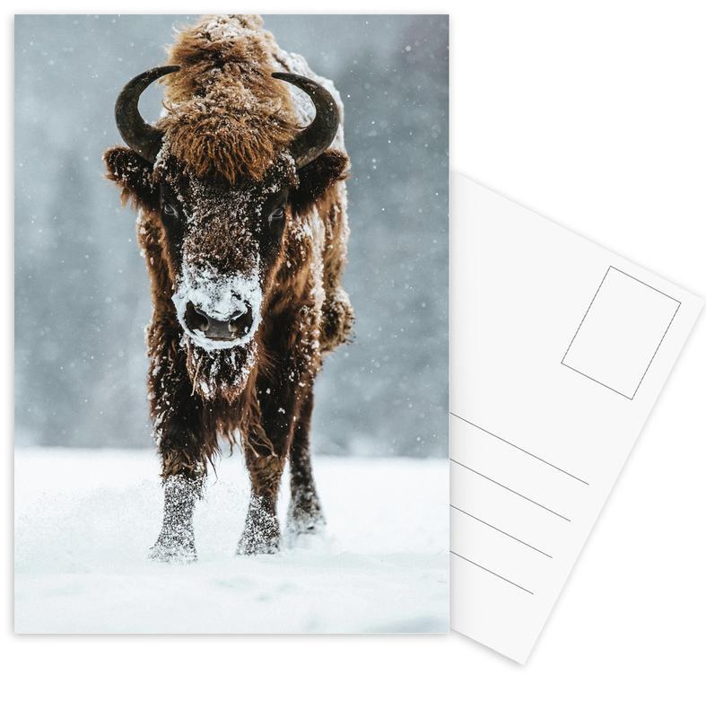 Kühe, Great Beast @szabo_ervin_edward -Postkartenset