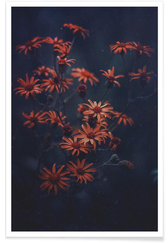 , Evening Bloom @ismaeljs affiche