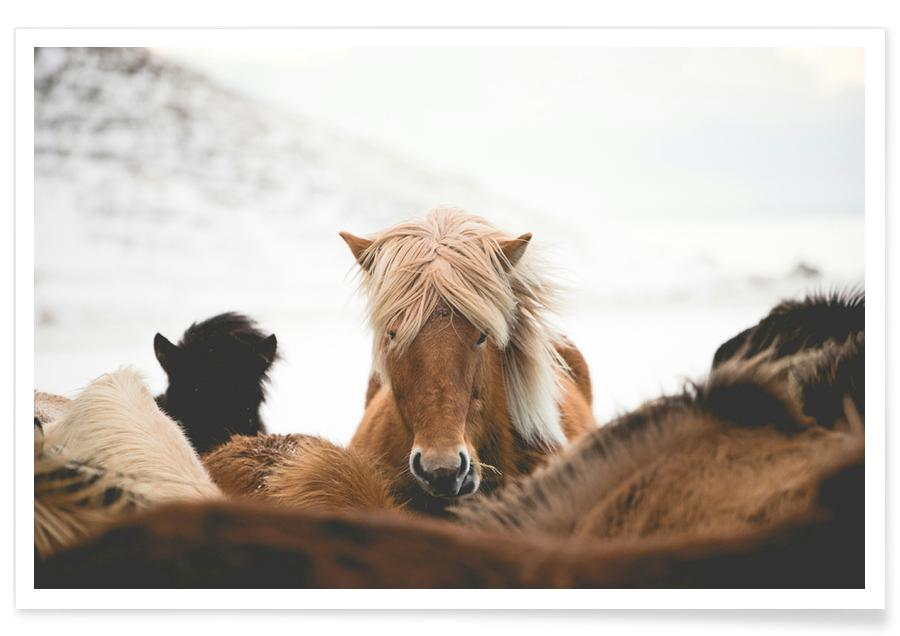 Horses, Head On by @robmulally Poster