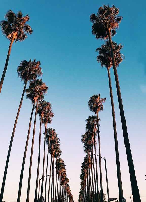 Wanna Be in LA by @samfn -Leinwandbild