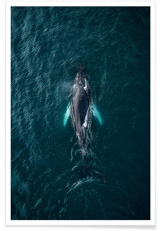 Ocean, Lake & Seascape, Whales, Tail As Old As Time by @regnumsaturni Poster