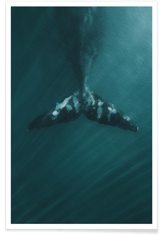 Baleines, Before The Splash by @KevinZaouali affiche