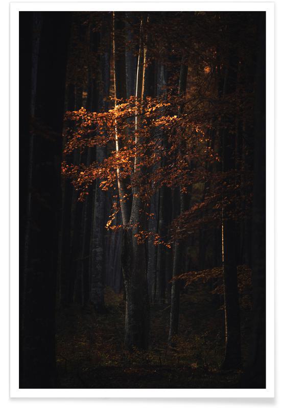 Forêts, Molten Sunlight by @szabo_ervin_edward affiche