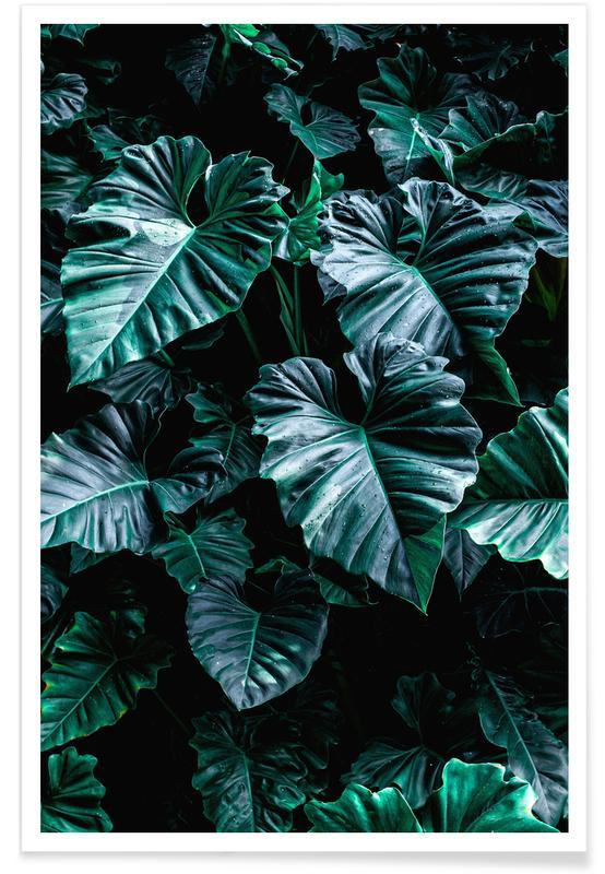 Bladeren en planten, Rain Catchers by @nabodin poster