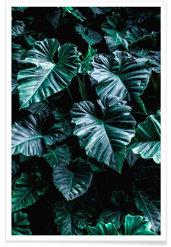 Leaves & Plants, Rain Catchers by @nabodin Poster